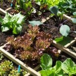 What is the best soil for a vegetable garden_