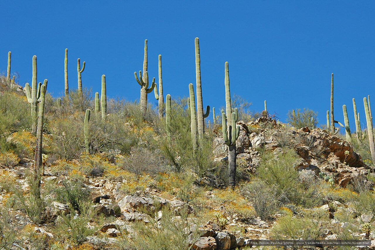 Flowers Desert Climate