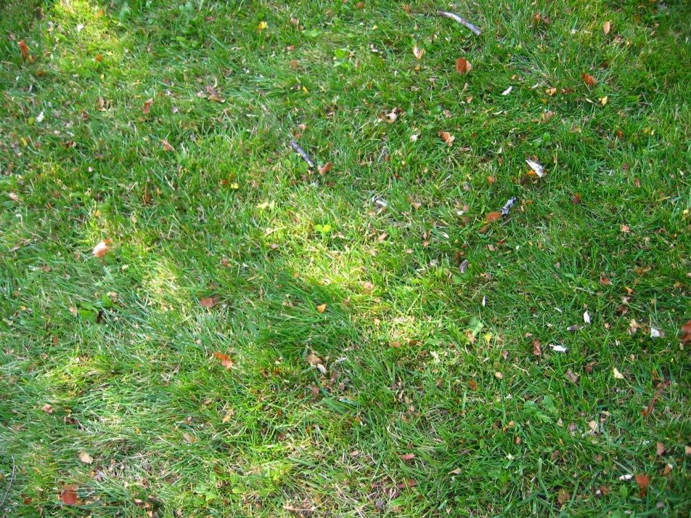 Benefits Mulching Leaves Lawn
