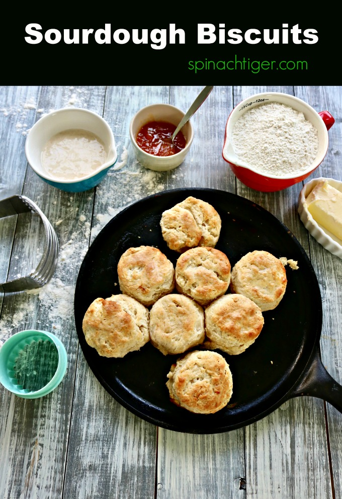 Make Easy Sourdough Biscuits from Spinach Tiger #sourdoughbiscuits #biscuits #southernbiscuits #sourdough
