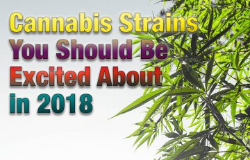 Cannabis Strains You Should Be Excited About in 2018 - Spinfuel VAPE