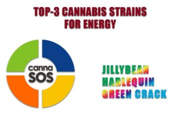 TOP-3 Cannabis Strains for Energy by Spinfuel VAPE