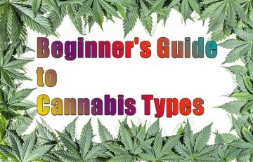 Beginner's Guide to Cannabis Types