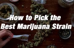 How to Pick the Best Marijuana Strain