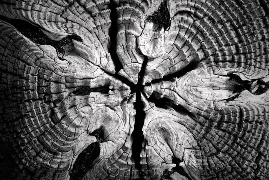 Art   Abstract Photography Wood Patterns