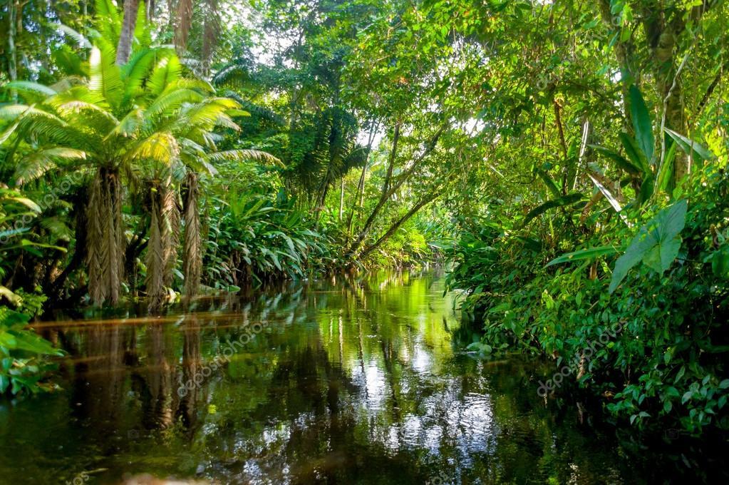 amazon rainforest location - HD1032×774