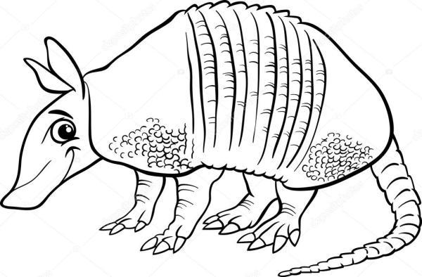 armadillo coloring page # 5