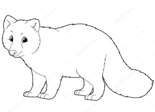 arctic fox coloring page # 29