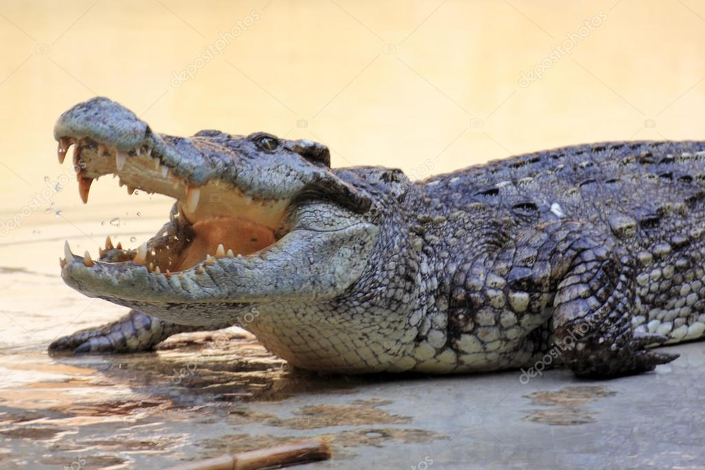 man eaten by crocodile - HD 1200×800