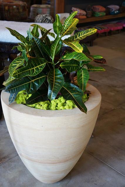 Large Urn Planter