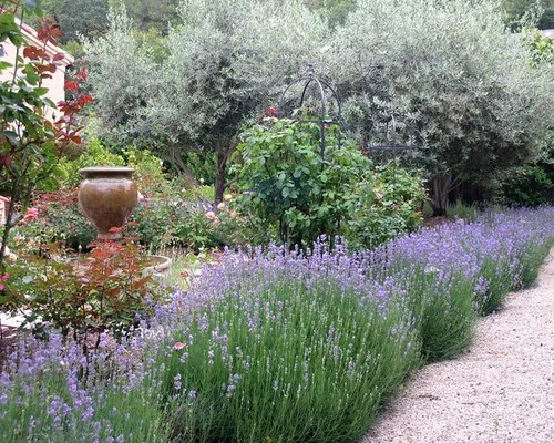 Lavender And Rosemary Border