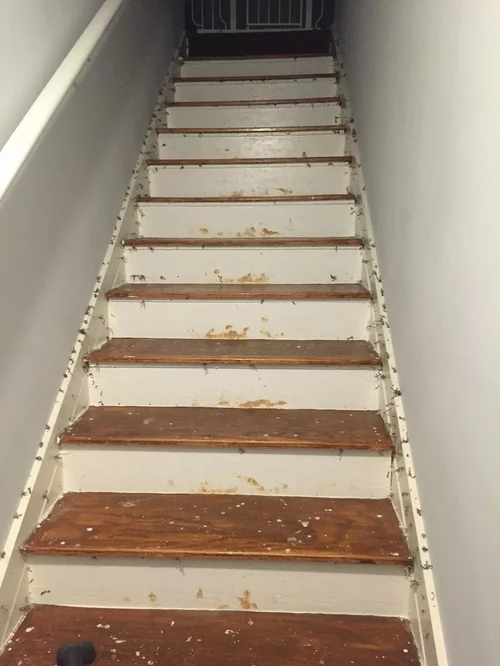 Removed Carpet From Stairs Uh Oh | Textured Carpet On Stairs | Floral | Wide Stripe | Short Cut Pile | Stylish | Brown