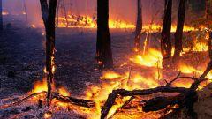 چگونه برای جلوگیری از آتش سوزی جنگل