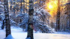 چه اتفاقی می افتد به درختان در زمستان
