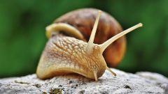 Slavic Animal Horoscope: Snail (Ral)