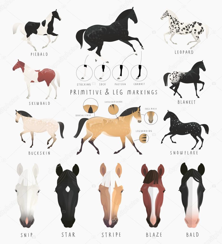 Horse Face Markings Diagram