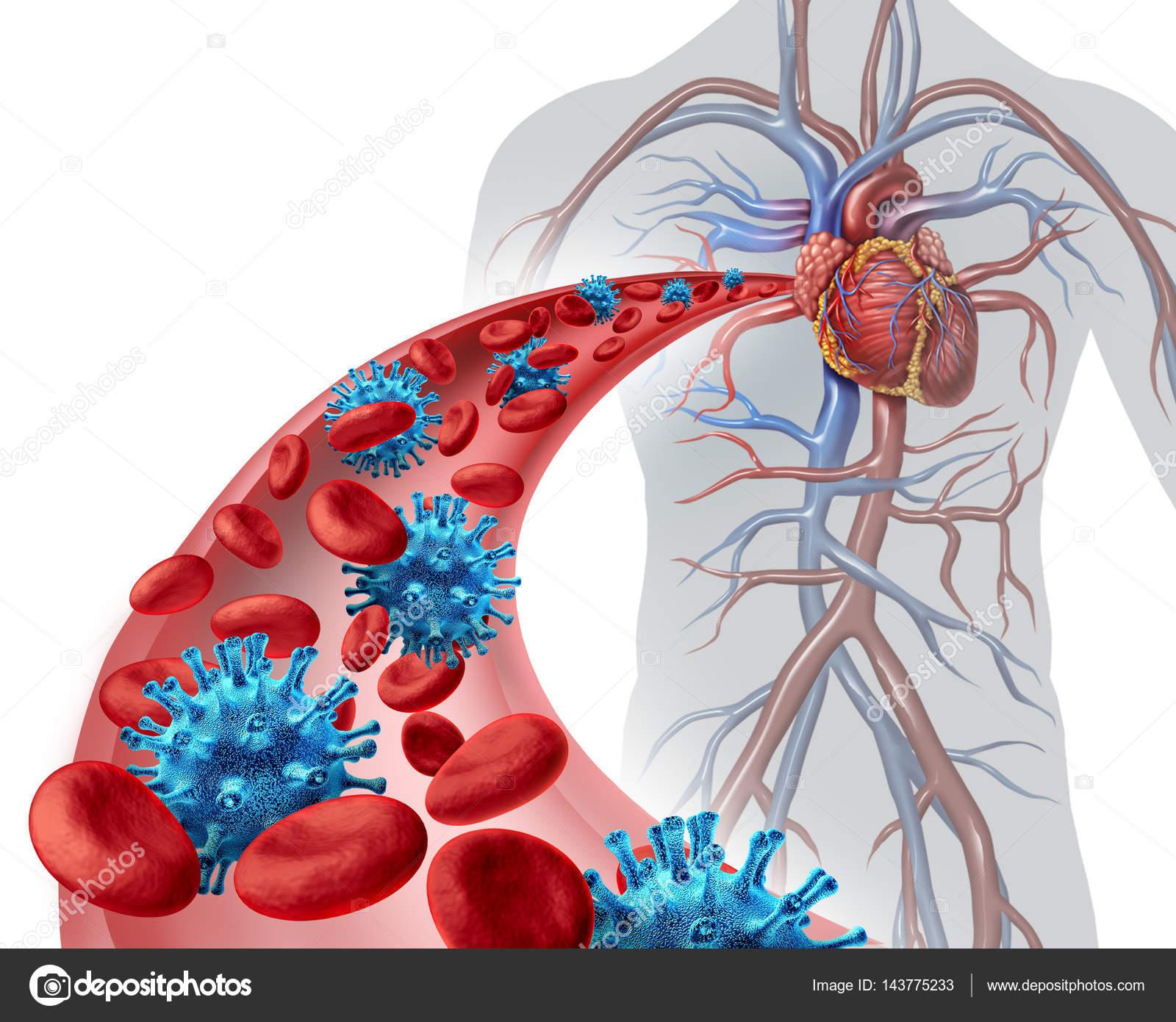 circulatory system images - HD1544×1231