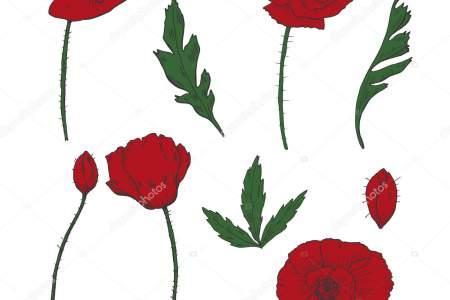 best wild flowers drawing of a poppy flower wild flowers