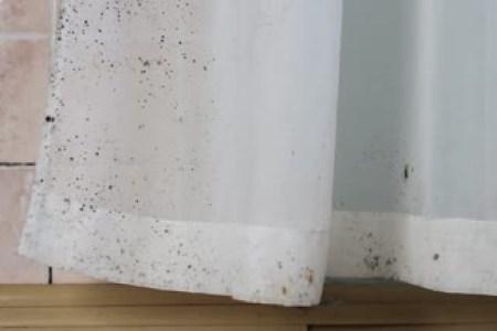 https://i3.wp.com/st3.depositphotos.com/16823926/19514/v/380/depositphotos_195143884-stockvideo-schimmel-huis-muren-gordijnen-tegels.jpg?resize=450,300