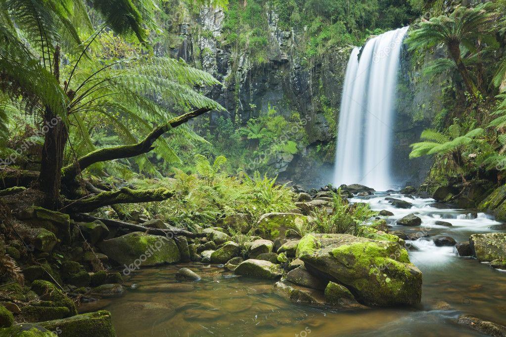 amazon rainforest facts - HD2560×1600