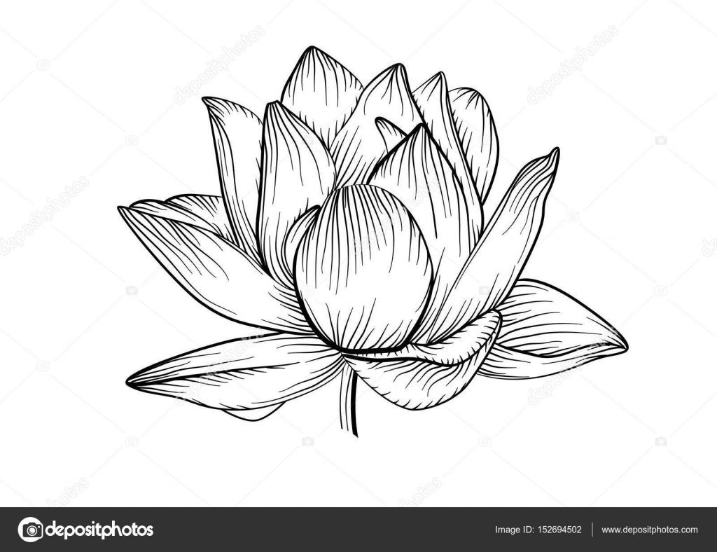 Blooming lotus flower tattoo sketch izmirmasajfo