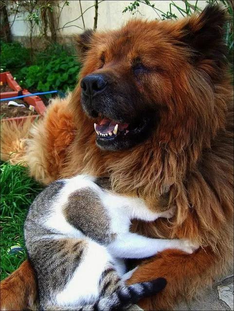 Animal Rescue Maryland