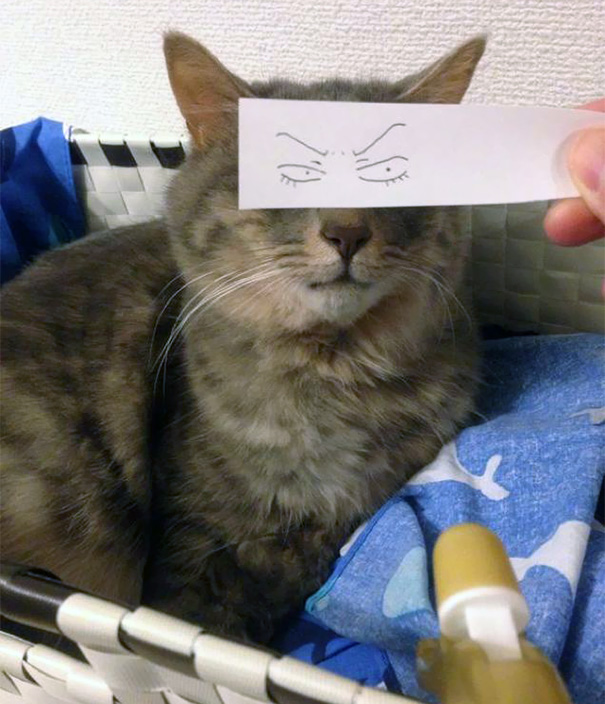 Cat Owners In Japan Are Giving Their Cats Funny Anime Eyes ...