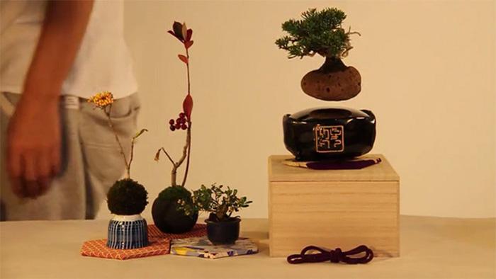 Kickstarter Floating Bonsai