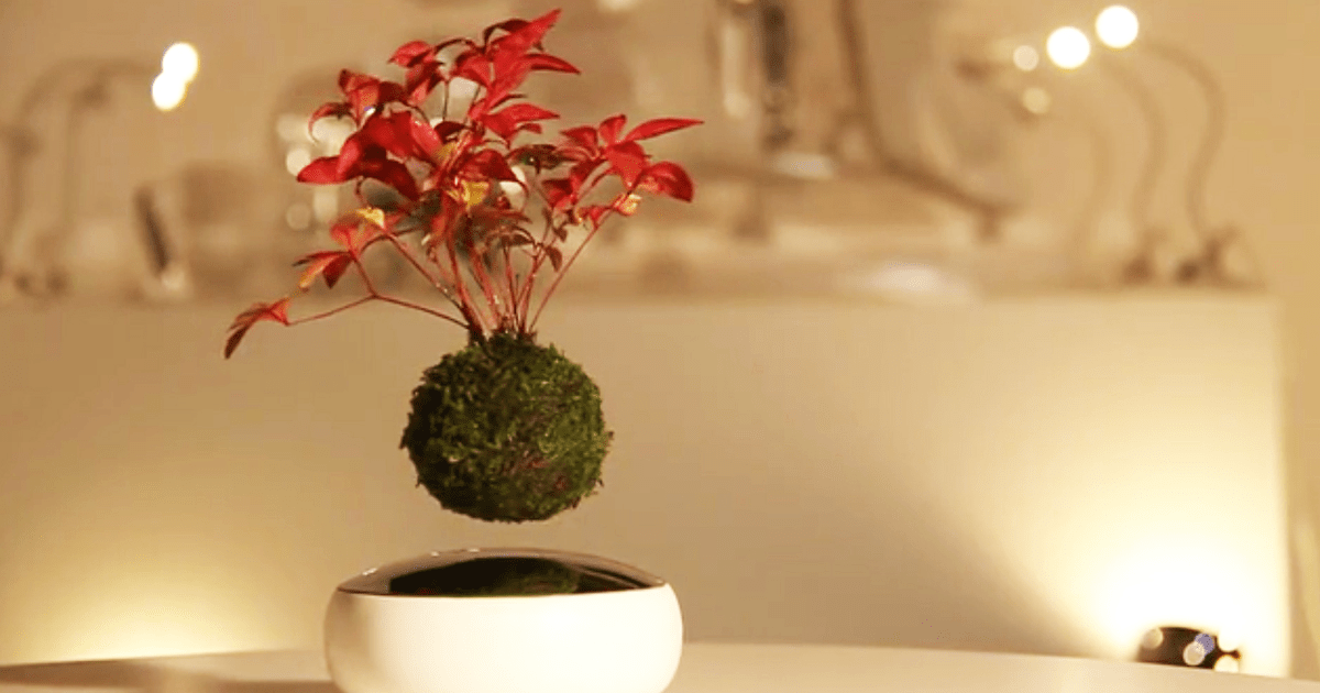 Floating Plants Air