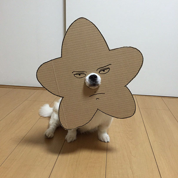 Japanese Woman Creates Hilarious Cardboard Cutouts With Her Dog  10      Cardboard Costume