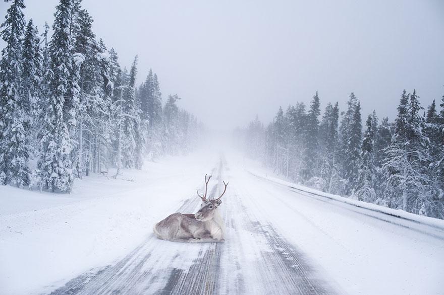 Northern Lights Christmas Lights