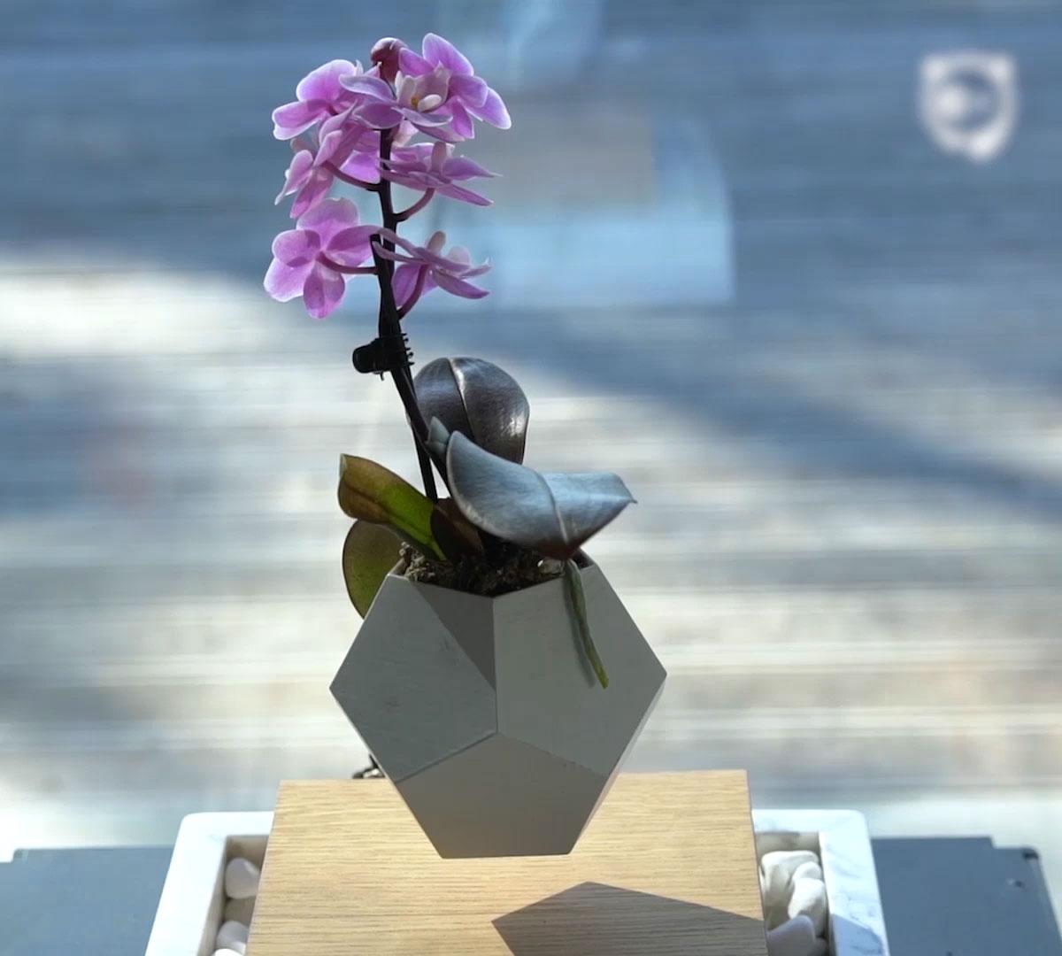 Diy Levitating Plant