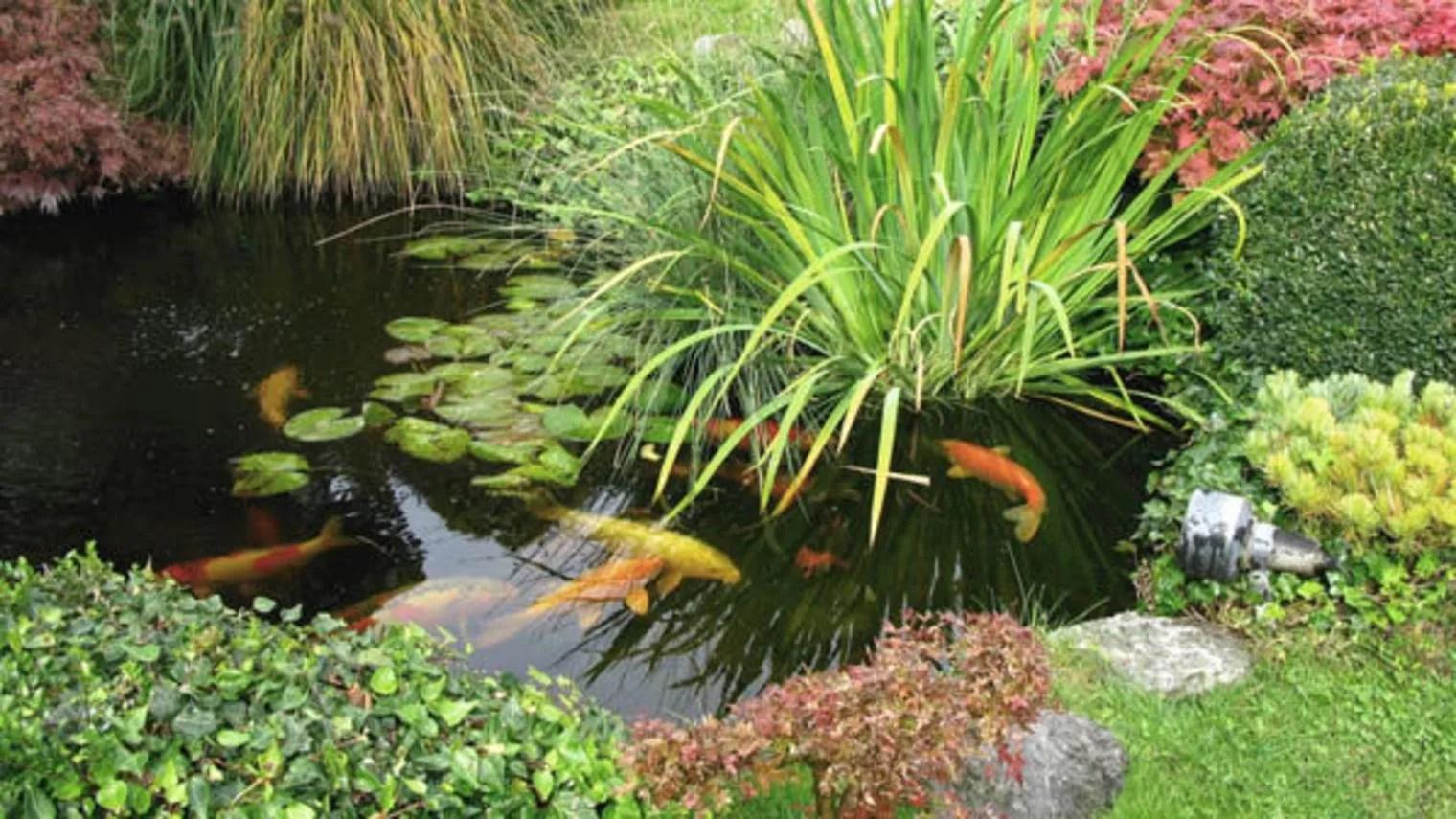 Koi Carp Ponds Designs