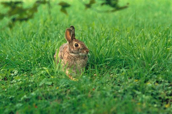 How Get Rid Rabbits Garden