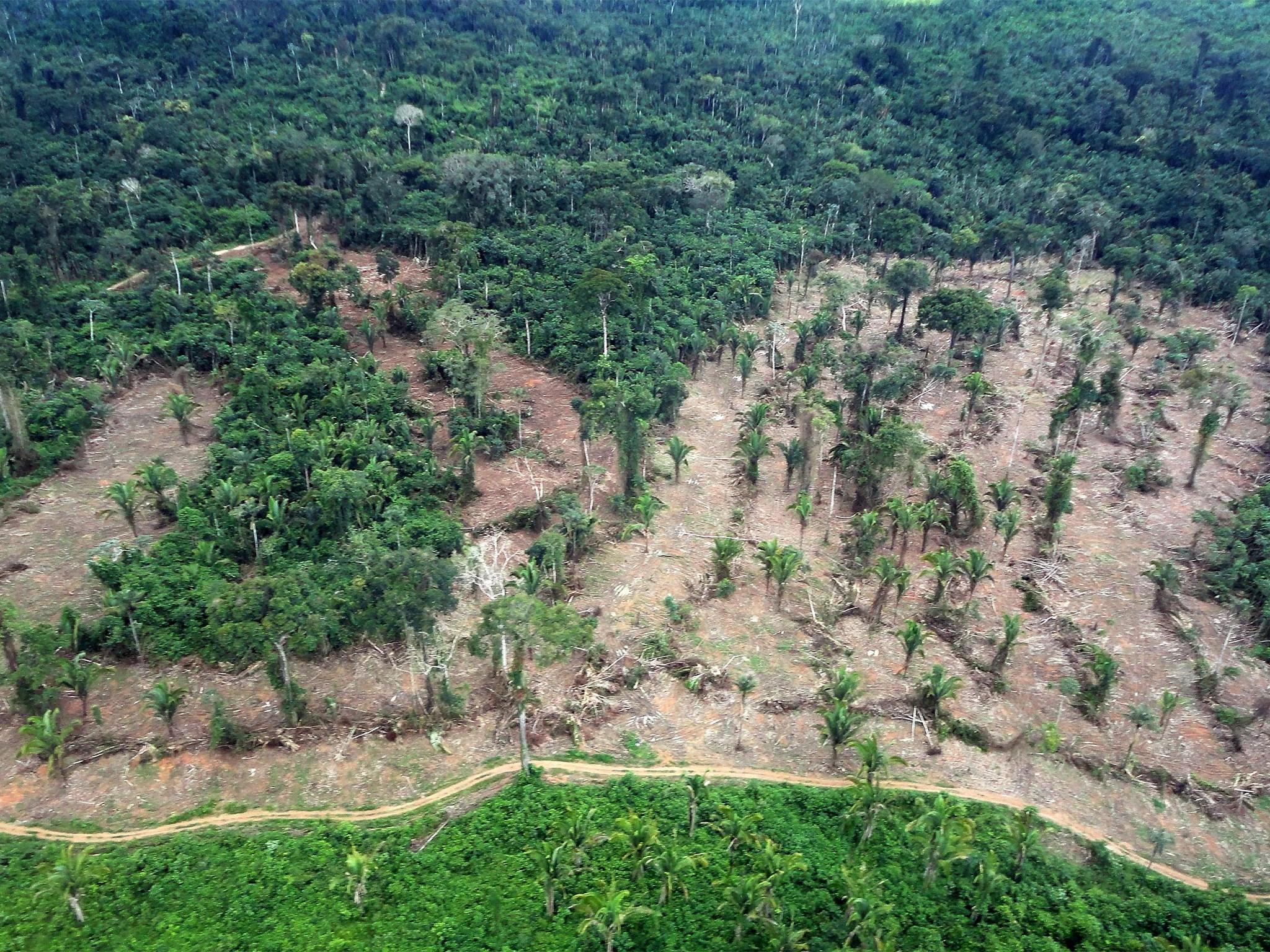 amazon rainforest deforestation - HD2048×1536