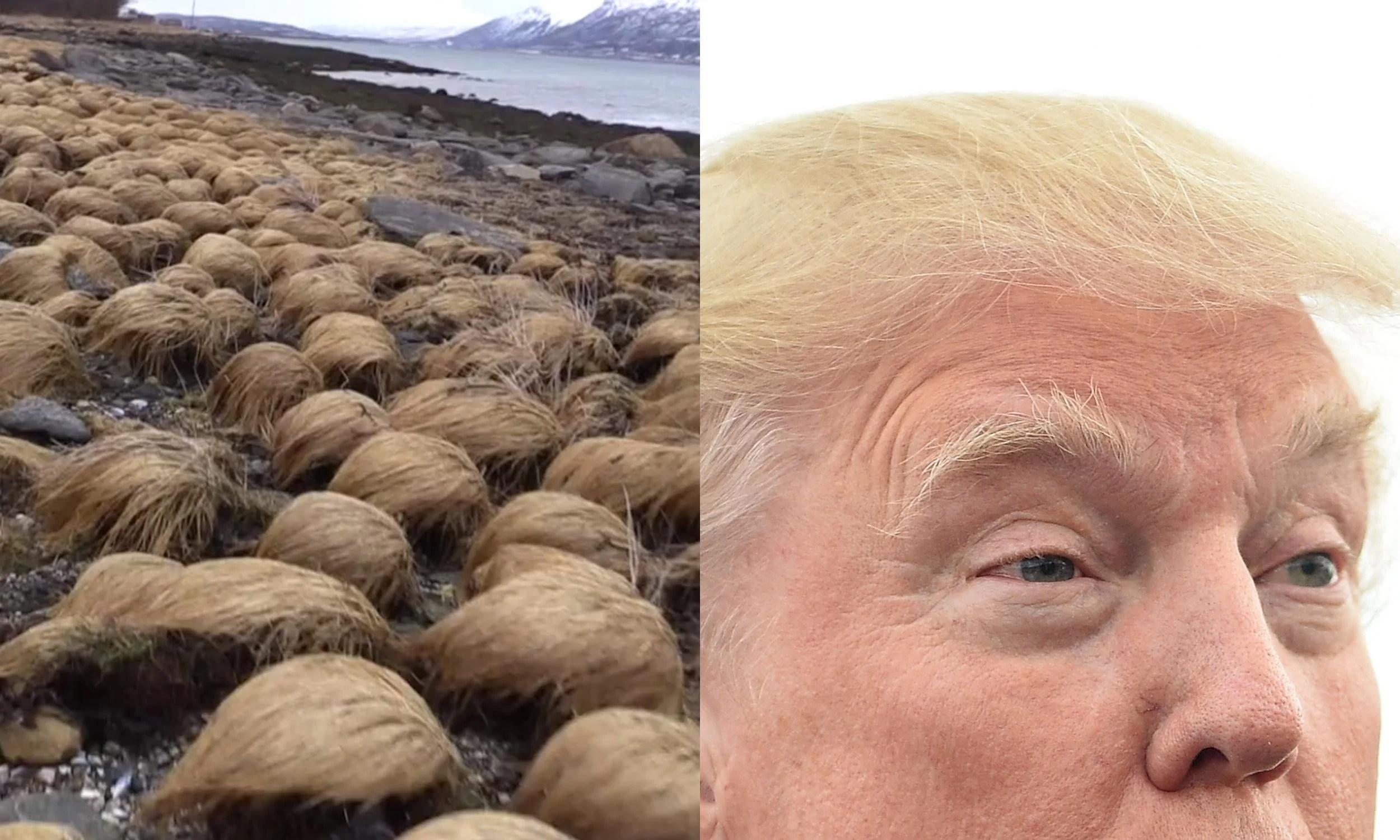 15 Trump Donald Look Things