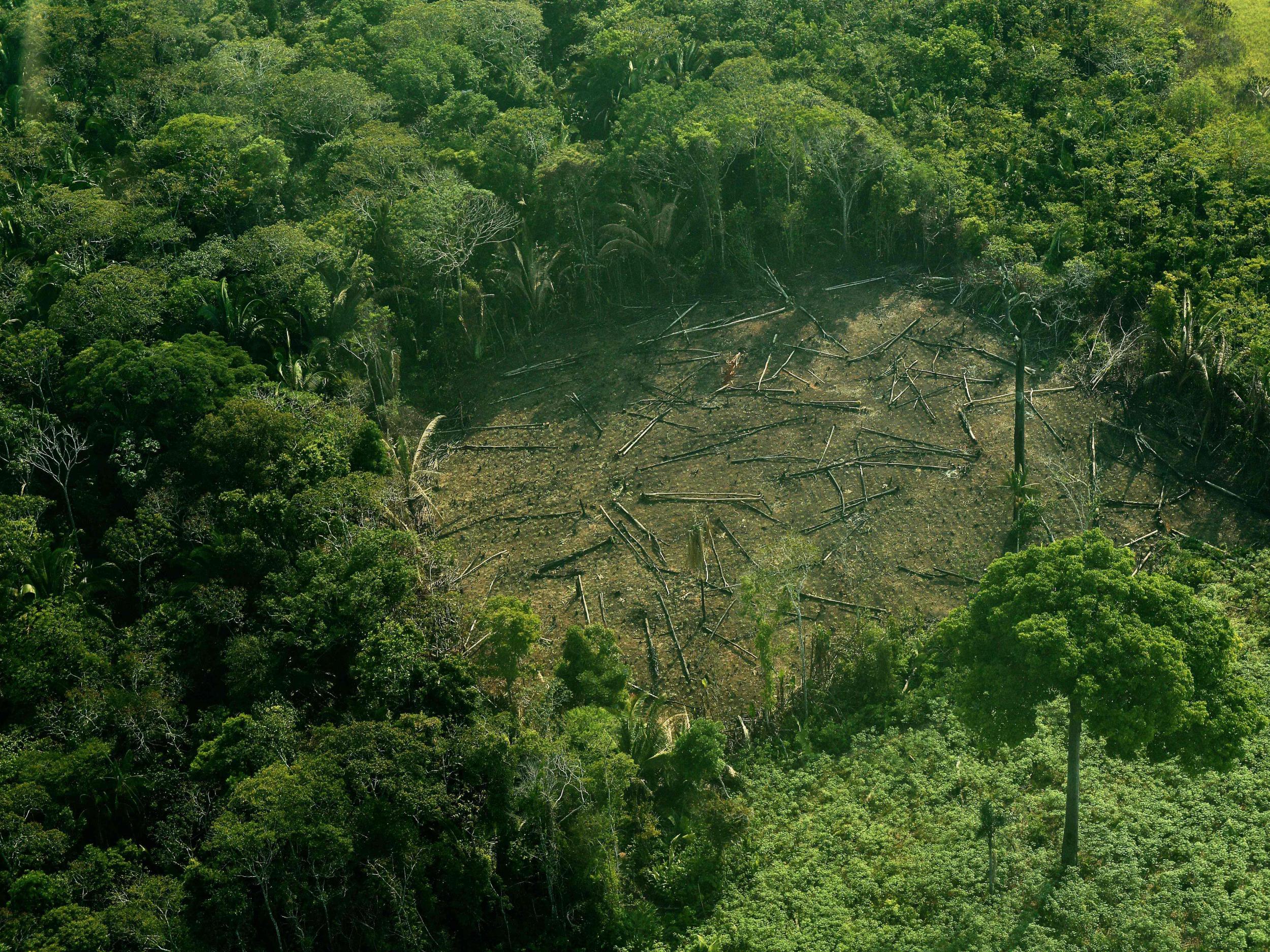 amazon rainforest facts - HD2500×1875