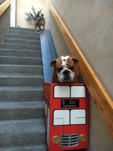 Dog Owner Makes Stairlift For Puppy With Arthritis