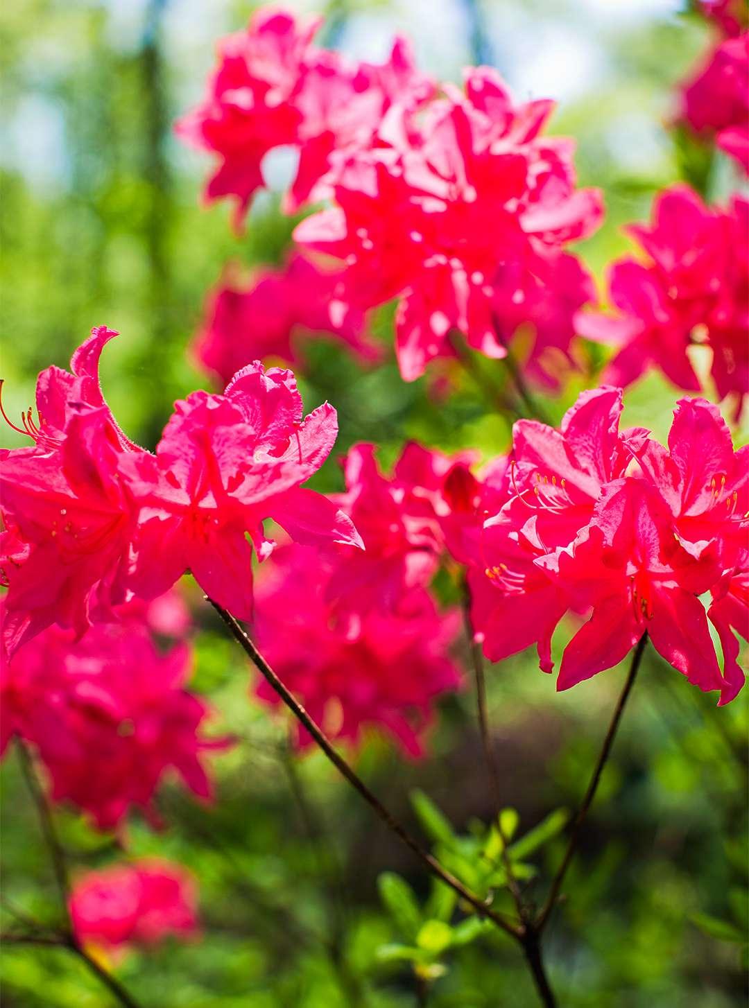 Flowering Shrubs By Season Better Homes Amp Gardens
