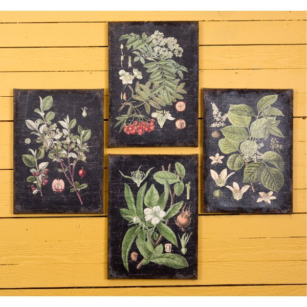 Shop wall art and wall decor   RC Willey Furniture Store     Assorted Botanical Wall Art on a Black Background