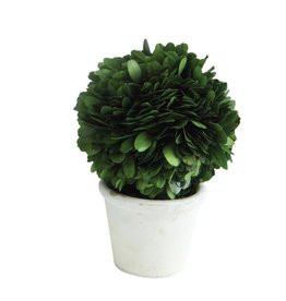 Accessories  Accents  and Decor for the Home   Amber Marie and Company 3  Round x 6 1 4 H Preserved Boxwood Topiary Single Ball