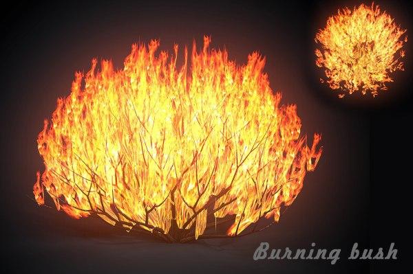 burning bush # 6