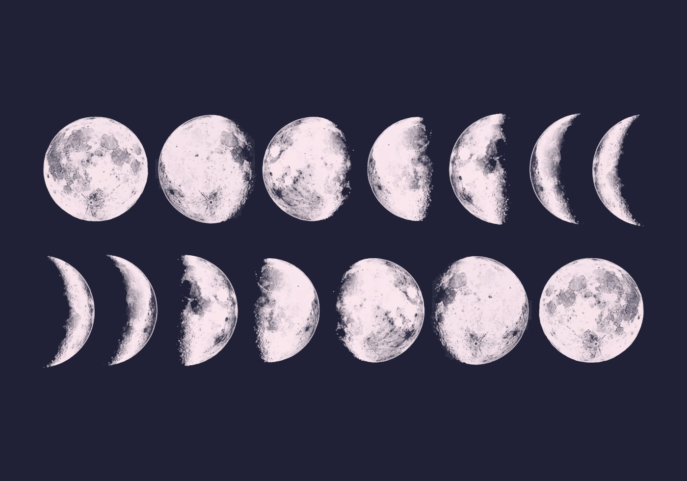 Vector Moon Phases Download Free Vectors Clipart