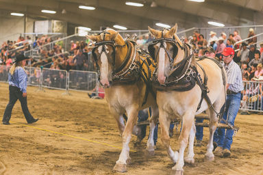 sublette-county-fair | Attractions