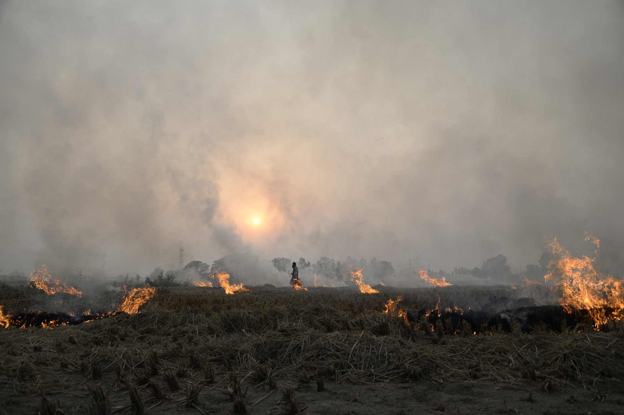 Farmers Unchecked Crop Burning Fuels India S Air Pollution The New York Times