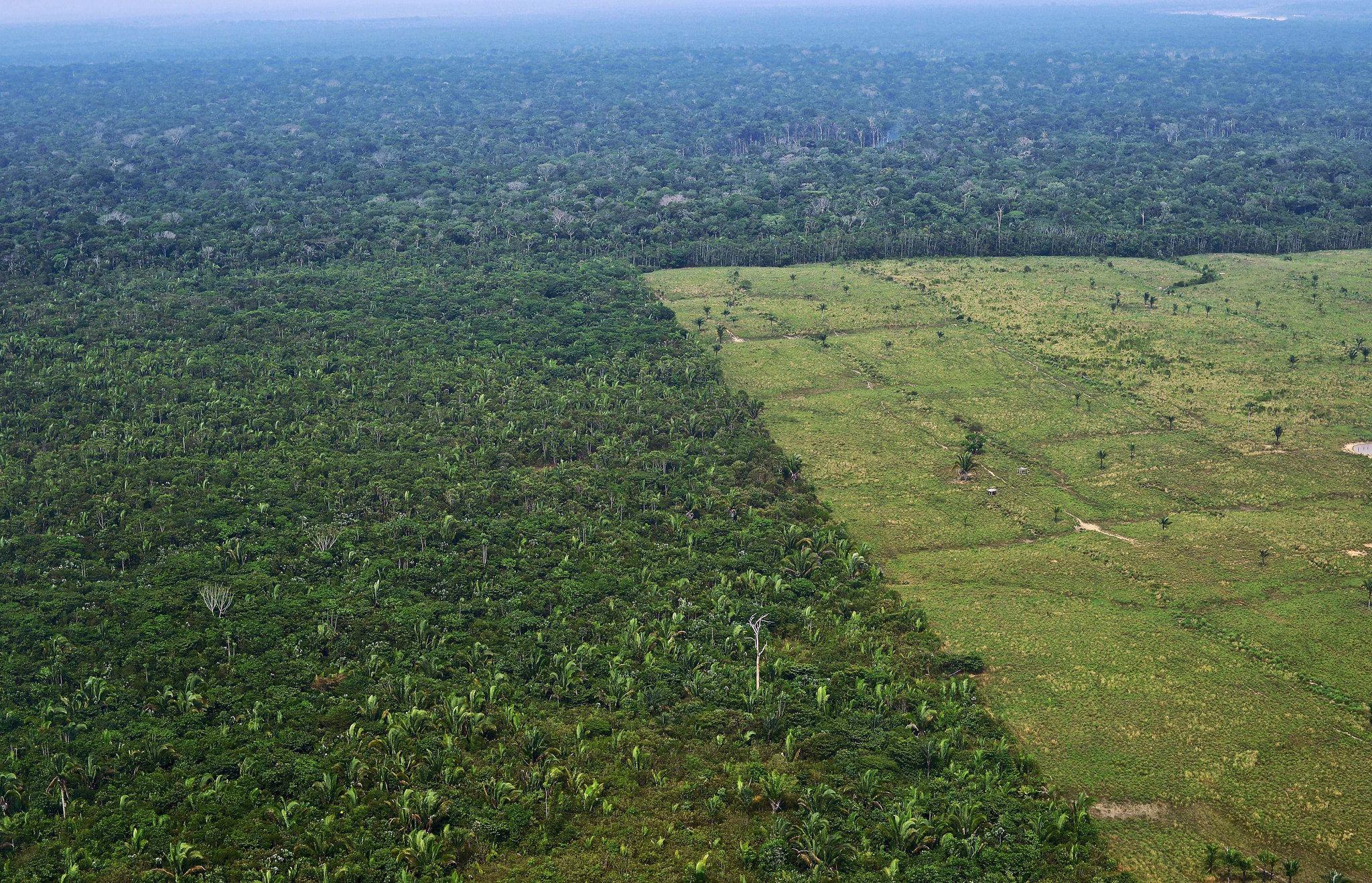 amazon rainforest deforestation - HD2048×1318