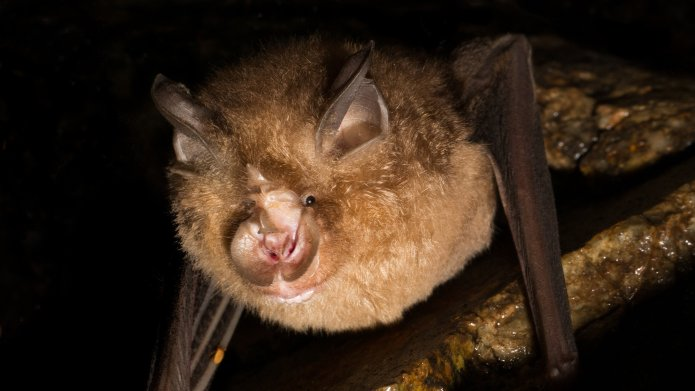 Watch Newly Found Bat Viruses Give Hints to Covid's Origins – COVID-19 News