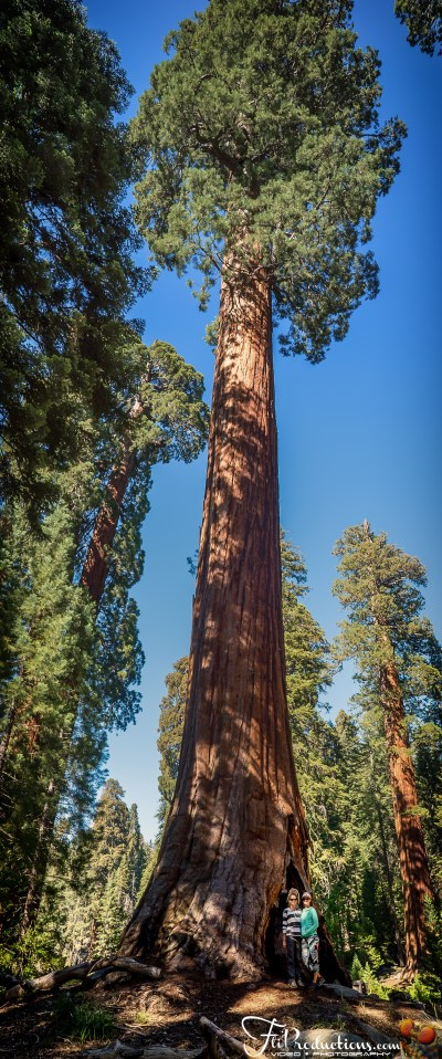 General Sherman, Moro Rock, Tall Tree - Sequoia National ...