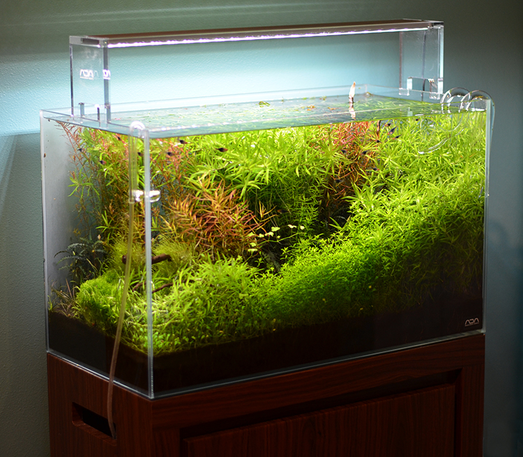 Buy Aquarium Plants Canada