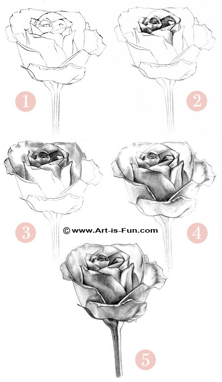 How to Draw a Rose: Learn to Draw Rose Pencil Drawings ...